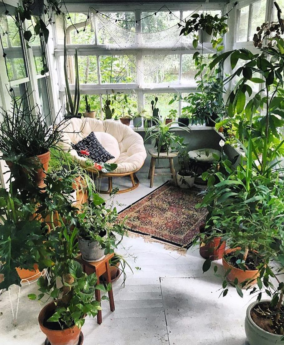 Plants Inside Rooms: Thesill: Brb Dreaming Of A Plant