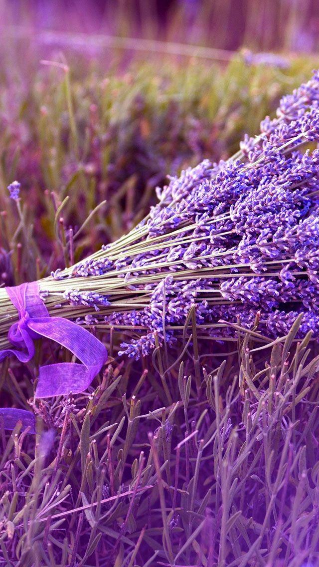 Girl adel miller stripping near lavender flowers bach