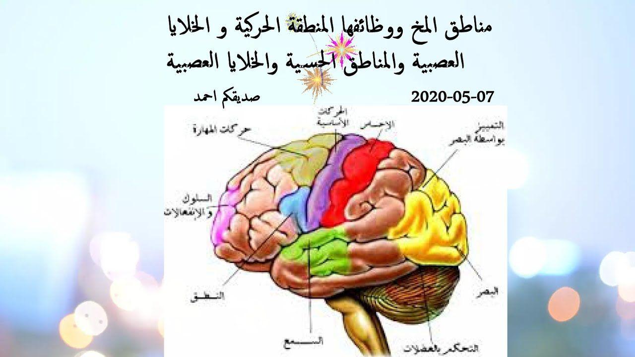مناطق المخ ووظائفها المنطقة الحركية و الخلايا العصبية والمناطق الحسية وا The Creator Disney Characters