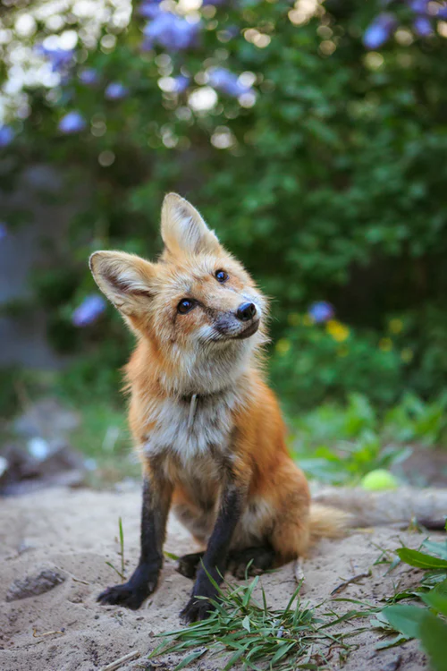 Animal Images Download Free Images on Unsplash Animals