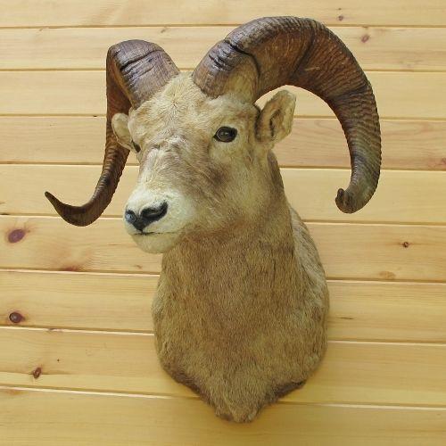 California Bighorn Sheep Taxidermy Mount | Deo India | Big