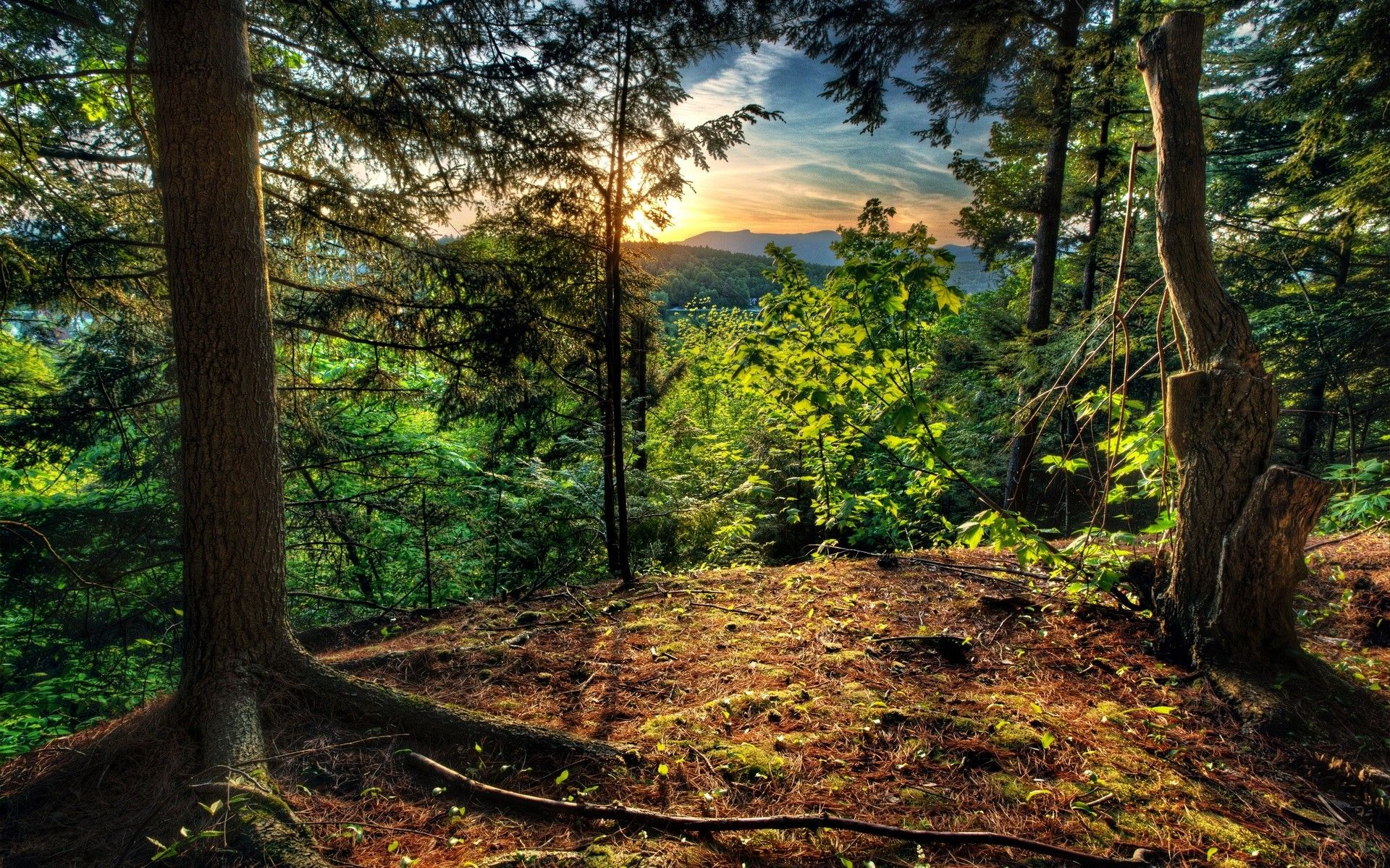 tree green forest sunshines mountain climbing views super hd