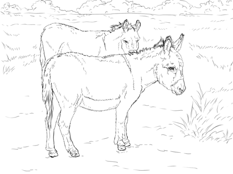 Two Donkeys Coloring Page Free Printable Coloring Pages Horse Coloring Pages Animal Coloring Books Coloring Pages