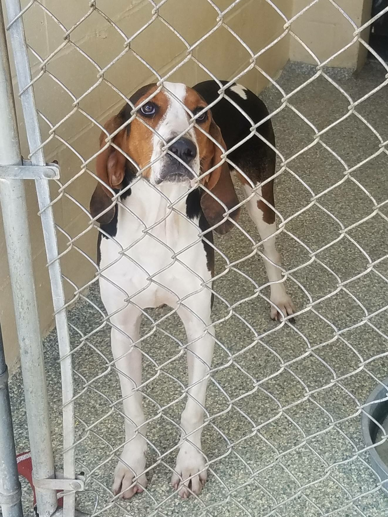 Cletus waiting for his forever home (With images