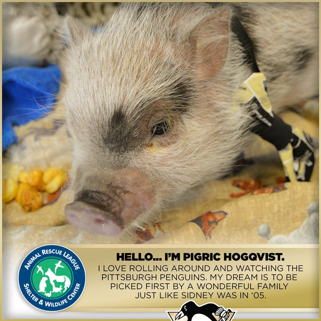 16+ Almost home animal rescue league ideas