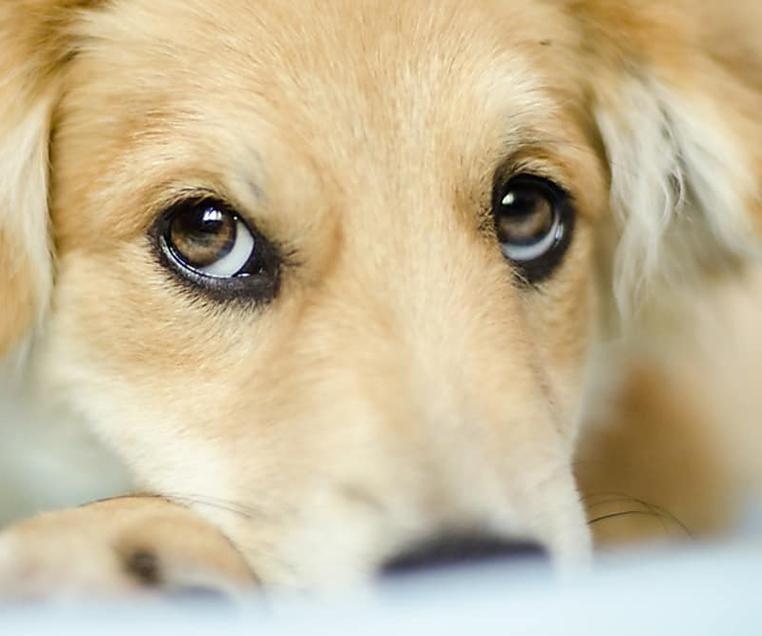 Euer Hund Springt Euch Nicht Vor Freude An Wenn Ihr Nach Hause Kommt Sagt Hundetrainer Rutter Hunde Hundetrainer Und Nach Hause Kommen