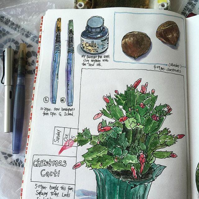 Daily visual journal: newly bought waterbrushes and ink; Christmas Cacti blooming soon😀; chestnuts. 🎨📒 #caobeckysketch #artjournal #artoftheday #artaddiction #art_everywhere #illustrations #illustratemyworld #visualdiary #visualjournal #handdrawing #handdrawnart #sketch #sketchbook #moleskine #art #artlife #artnerd #artstagram #drawingoftheday #iloveart  #sketching #illust
