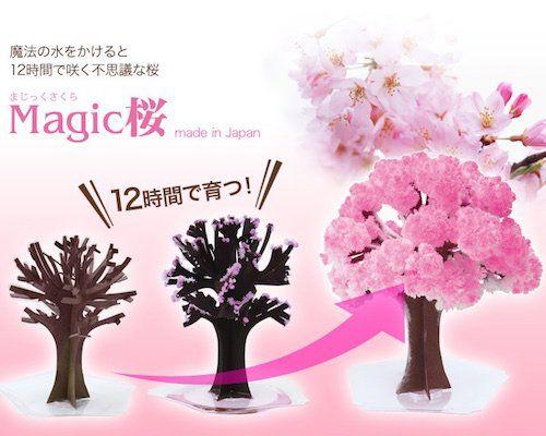 Magic Sakura Home Cherry Blossom Set Of 3 Cherry Blossoms Symbolize The Start Of Spring In Japan And When The Sakur Sakura Cherry Blossom Sakura Pink Blossom