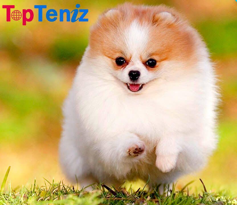 Top 10 Cutest Animals In The World 2020 Topteniz In 2020 Top 10 Cutest Animals Animals Cute Animals