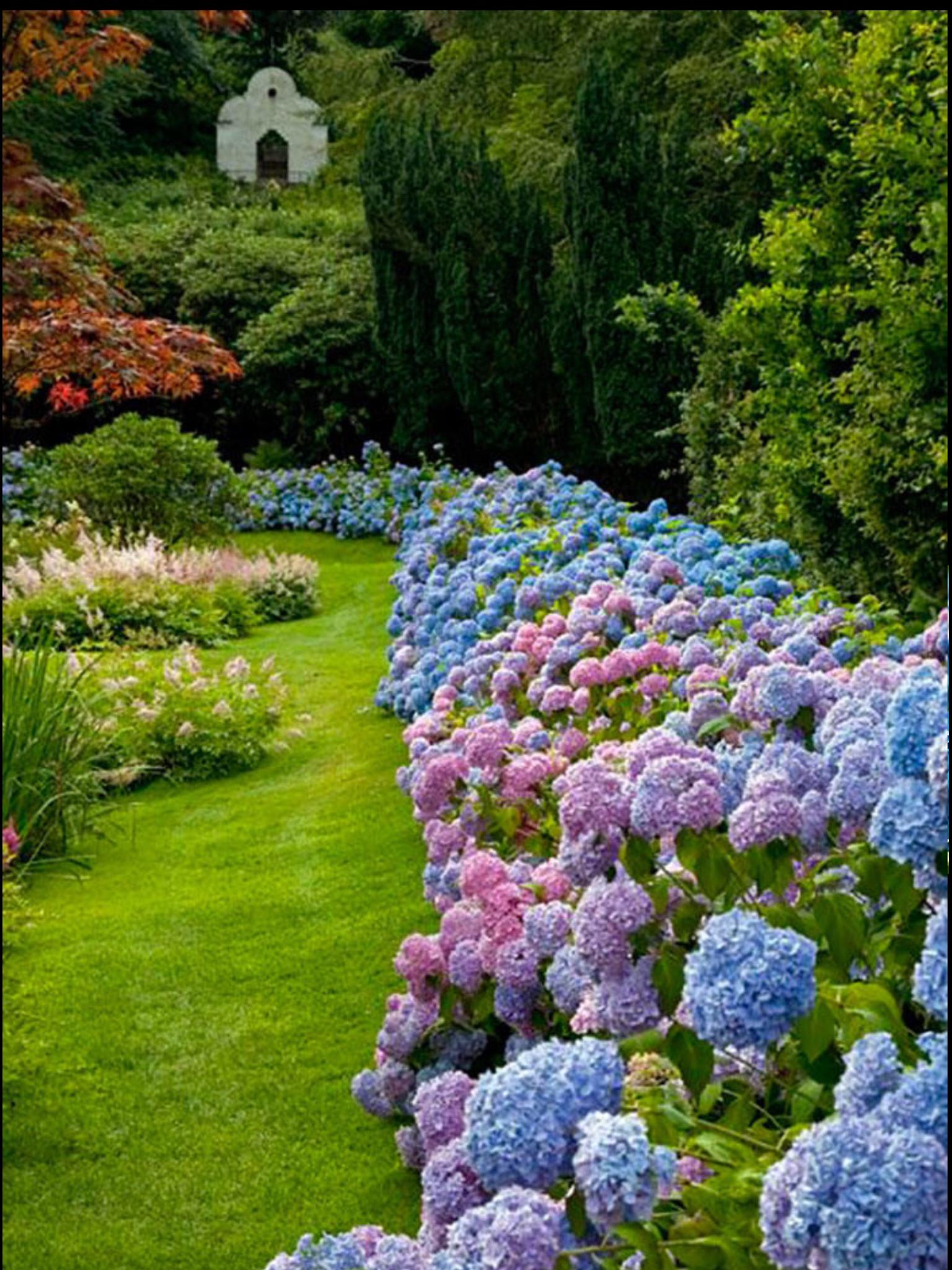 Pin By Paul Creasy On Nature Hydrangea Garden Hydrangea