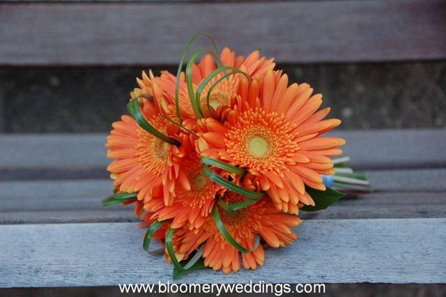 Coral Gerber Daisy Wedding Bouquets Flowers Coral Gerbera Daisies Daisy Bridal Bouquet Gerber Daisy Bouquet Wedding Wedding Floral Centerpieces