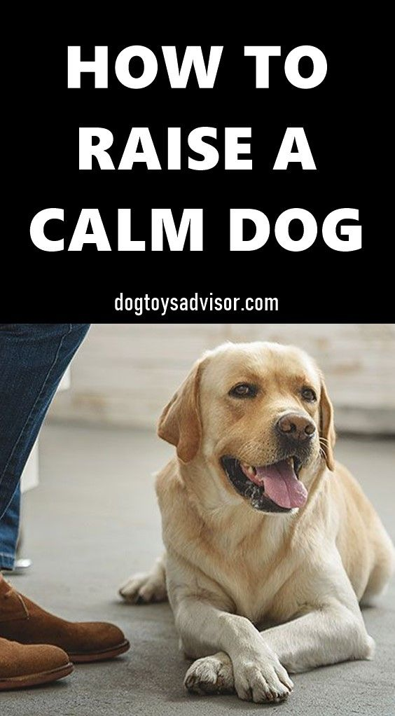 10 Tips To Raise A Calm And Relaxed Dog Calm Dogs Relaxed Dog Dogs