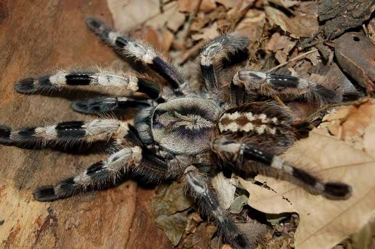 Pin Van Arno Ooms Op Spinnen Spiders In 2020 Spinnen