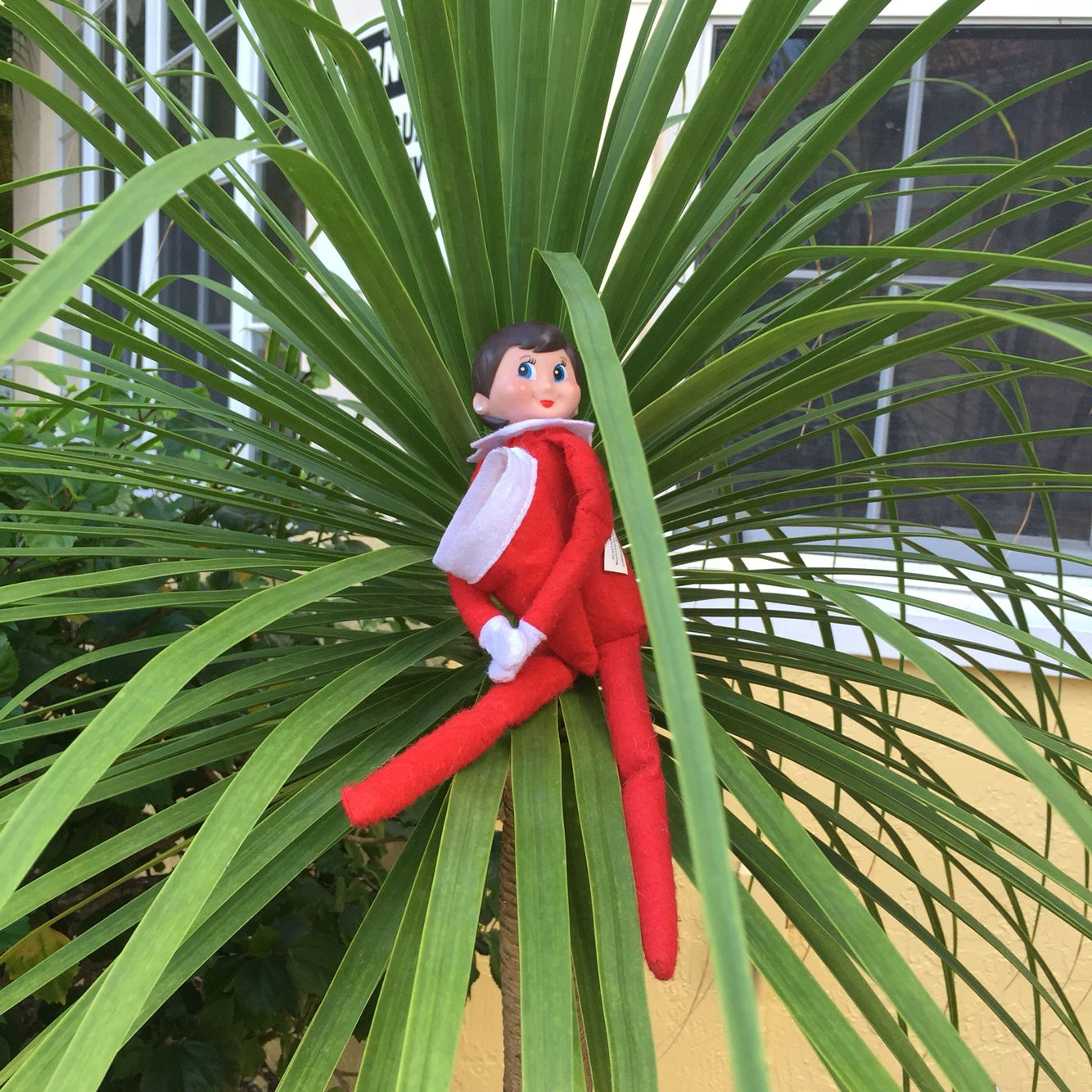 Elf on the shelf in the palms