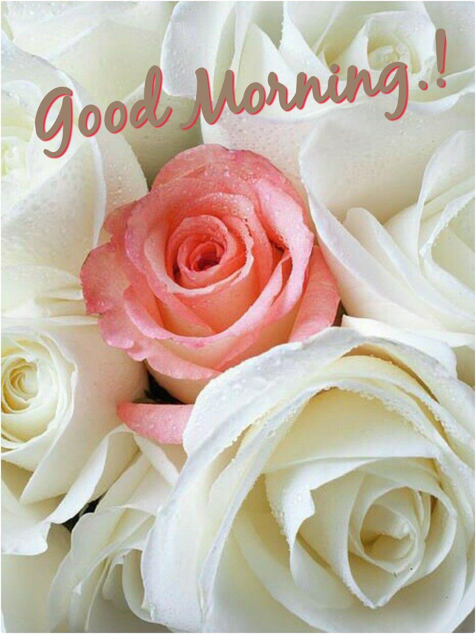 Good Morning Good Morning Flowers Morning Flowers White Roses