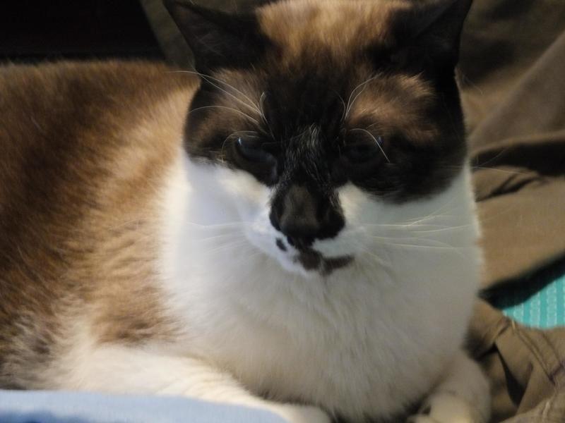 I Found Jasper On Petfinder Animal Rescue Cat Rescue Pet Adoption