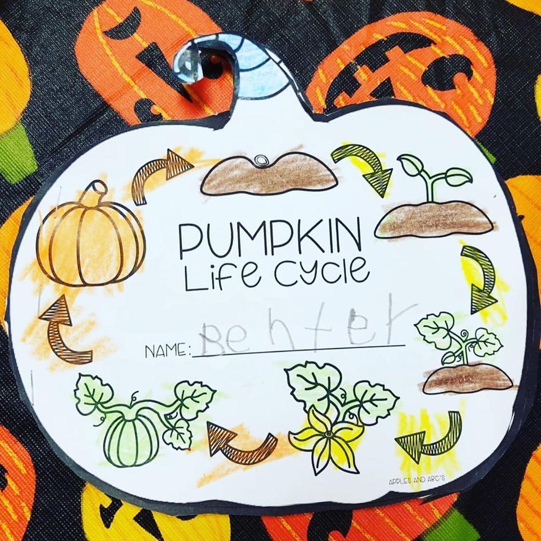 Pumpkin Life Cycle Mstaylorsfirsties449 Use My Pumpkin