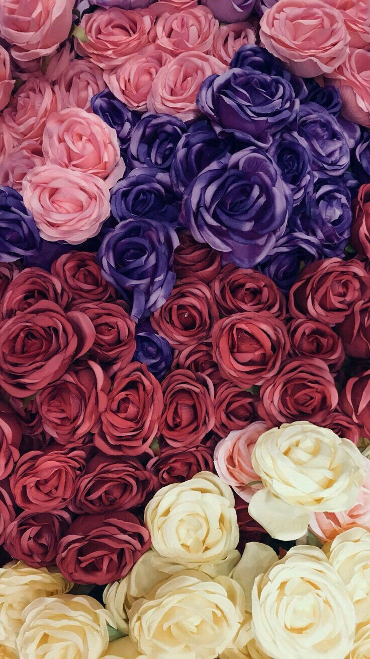 Pin by Sol Cortes on Wallpaper in Pinterest Flowers Rose