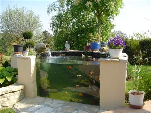 Glass for fishes giardini di erbe bassin a poisson for Pesci per laghetti esterni