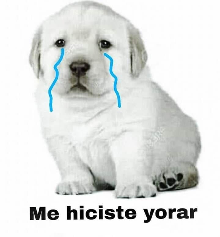 Pin De Shamira En Perro Quiero Uno Memes Divertidos Memes Memes Perrones