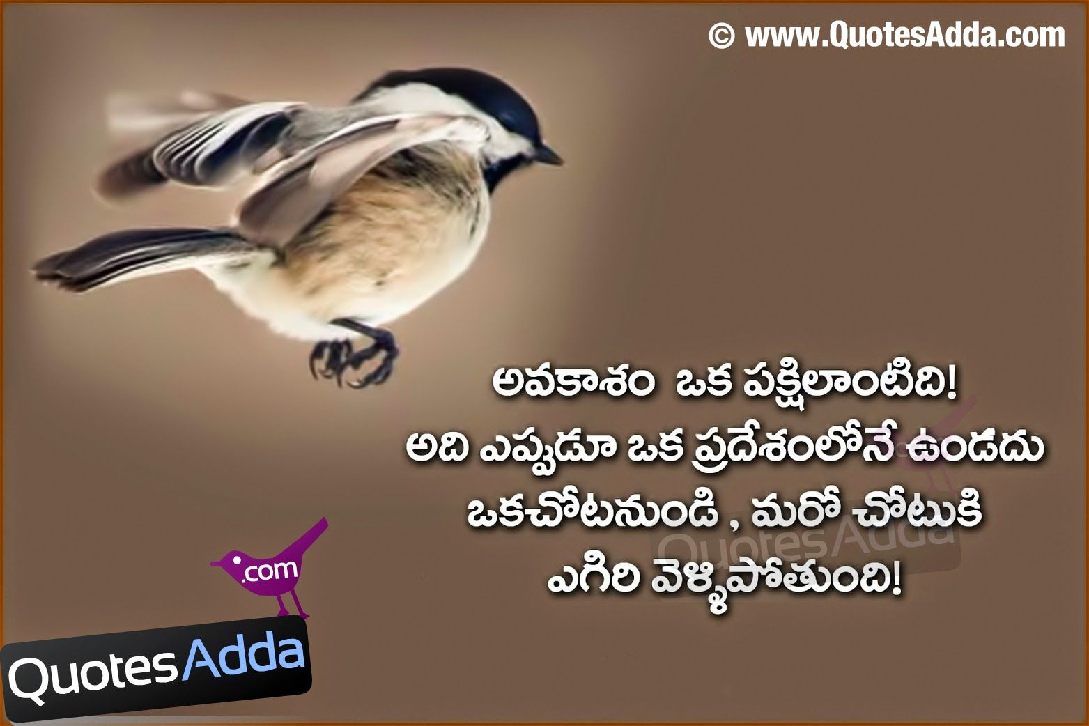 Life Quotes Facebook Wall Telugu Nice Learning Quotations