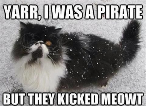 Shiver Me Timbers Animal Puns Pirate Cat Funny Animals