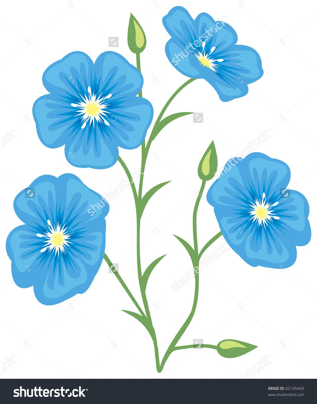 Flower Of Flax Flower Drawing Flowers Drawings