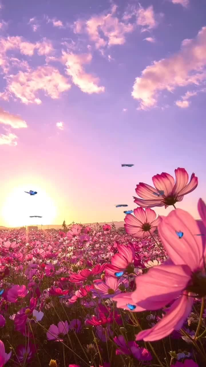 Pedro Morais Has Just Created An Awesome Short Video With Original Sound Pedromorais12 Wallpaper Nature Flowers Flowers Photography Wallpaper Field Wallpaper Amazing flower video wallpapers
