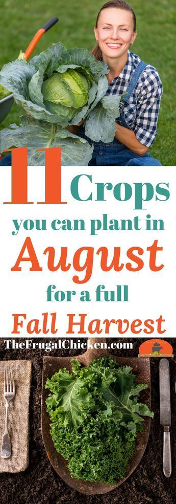 11 Vegetables You Can Start In August For A Full Fall Harvest #veggiegardens