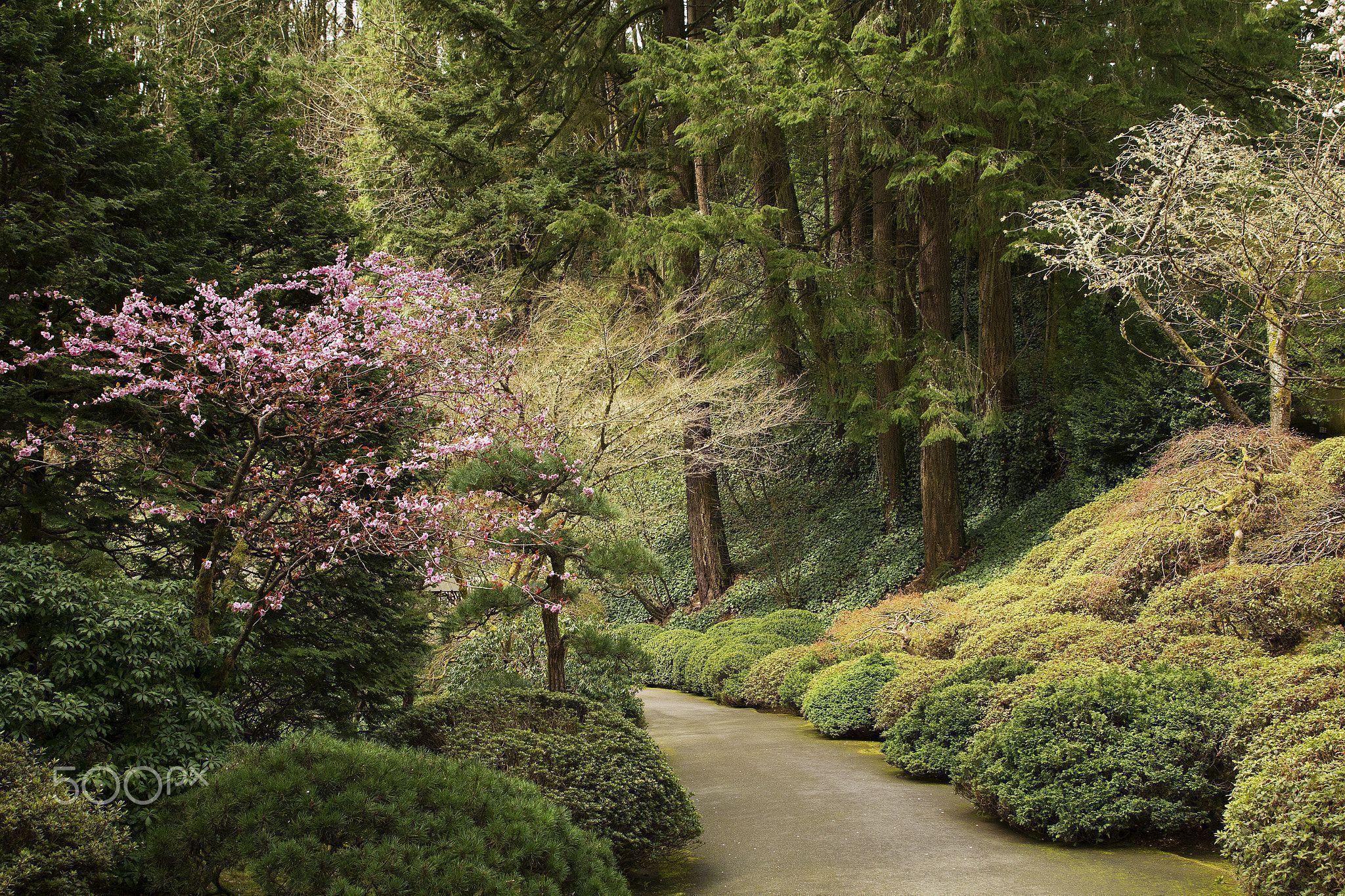 Portland Japanese Gardens, Oregon - The stunning and amazing ...