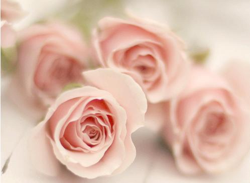 soft and pretty