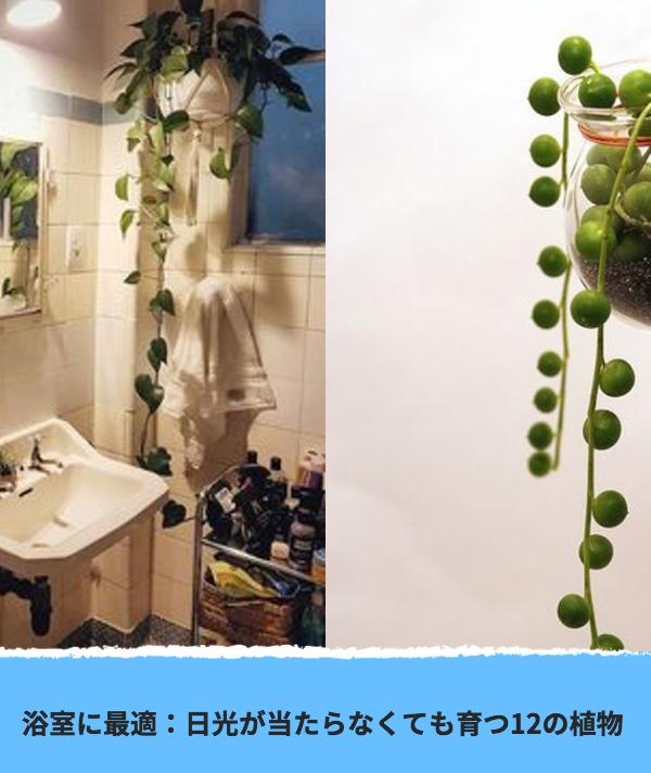 浴室に最適 日光が当たらなくても育つ12の植物 Goruntuler Ile Bahce