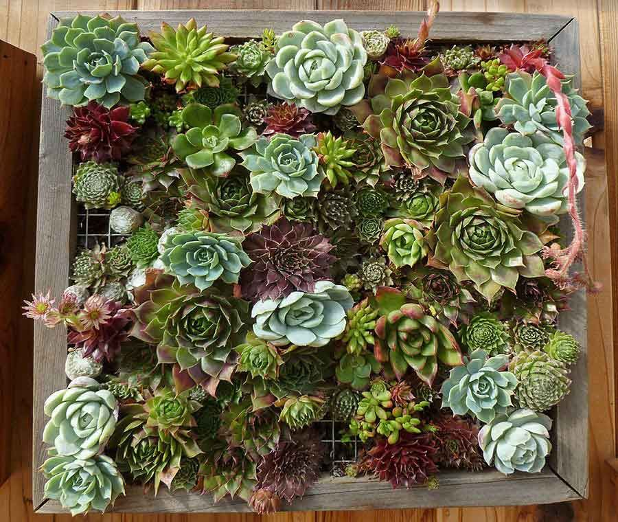 Marvelous Vertical Garden Idea | Gorgeous Succulents Would Be Perfect For California  Backyards
