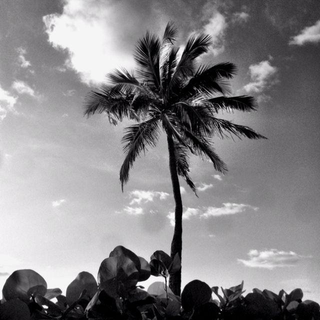 Good morning, palm tree.