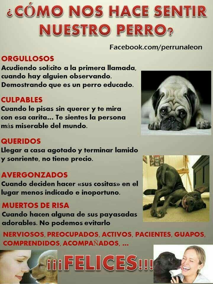 Pin De Ely Drozdz En Mascotas Amantes De Perros Amor De Perro Mascotas Frases
