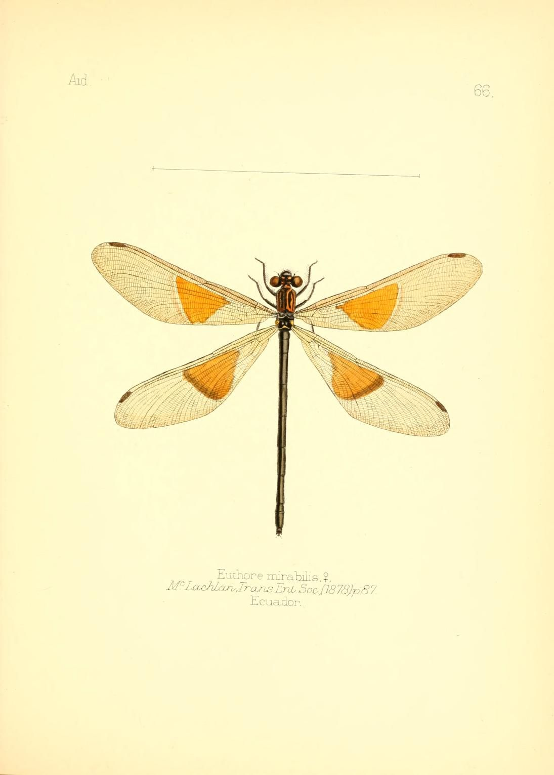 v. 1 - Aid to the identification of insects / - Biodiversity ...