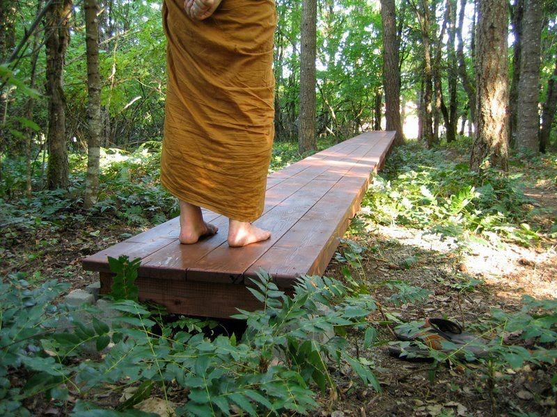 Instruction on forest walking and walking meditation