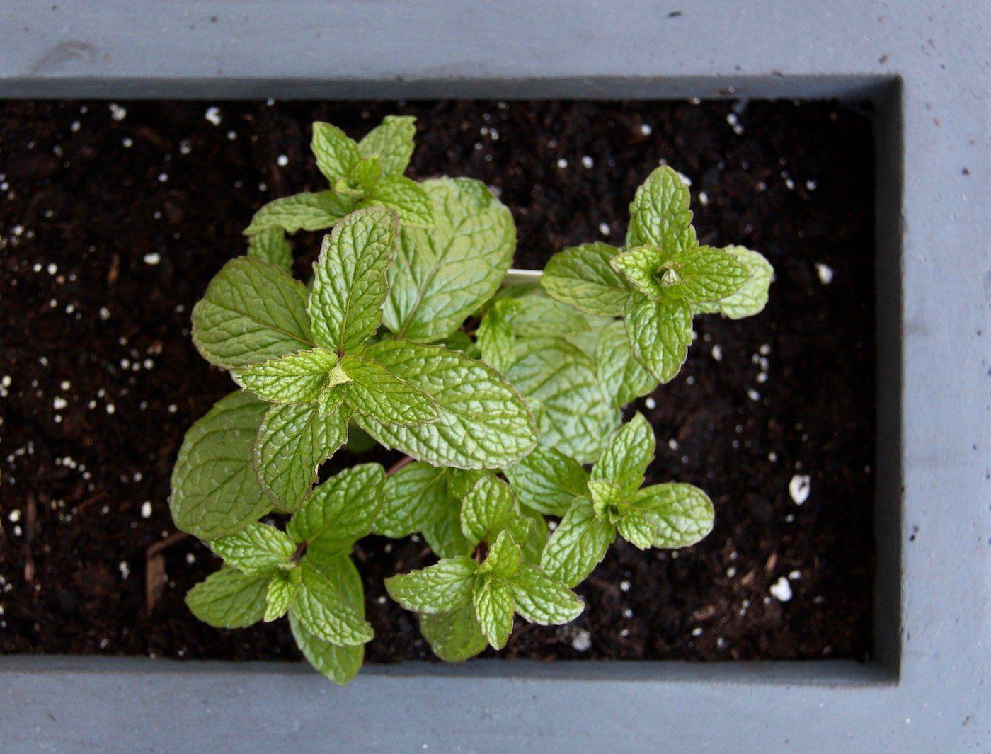 Promix Gardening