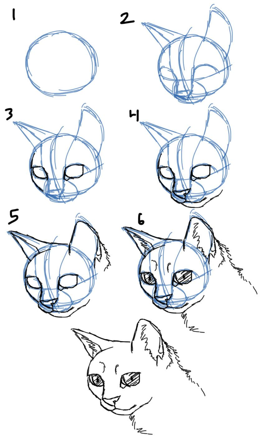 how to draw a cat face simple