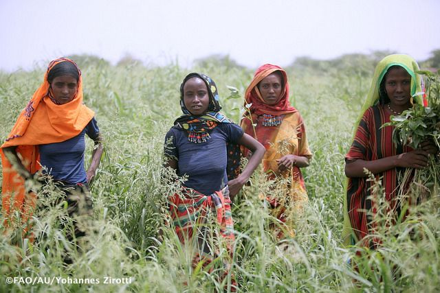 Gender Equality Is Central To The Food And Agriculture Organisation Of The United Nations Fao S Mandate To Achieve Food Security For All By Raising Levels Of