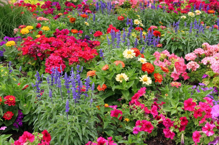 Enjoy colorful flowers up until frost Gardens Fall flowers and