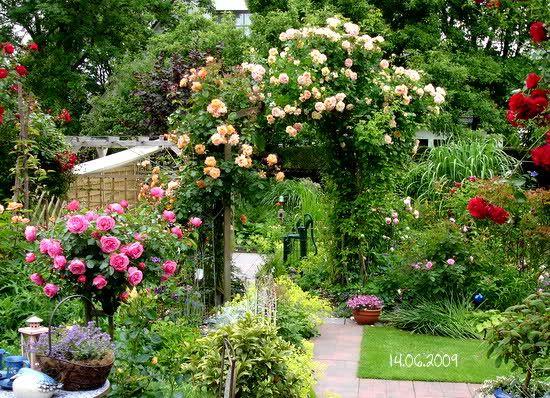 Pin Auf Rose Garden