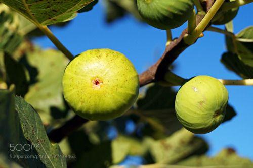 figs by azrar  IFTTT 500px