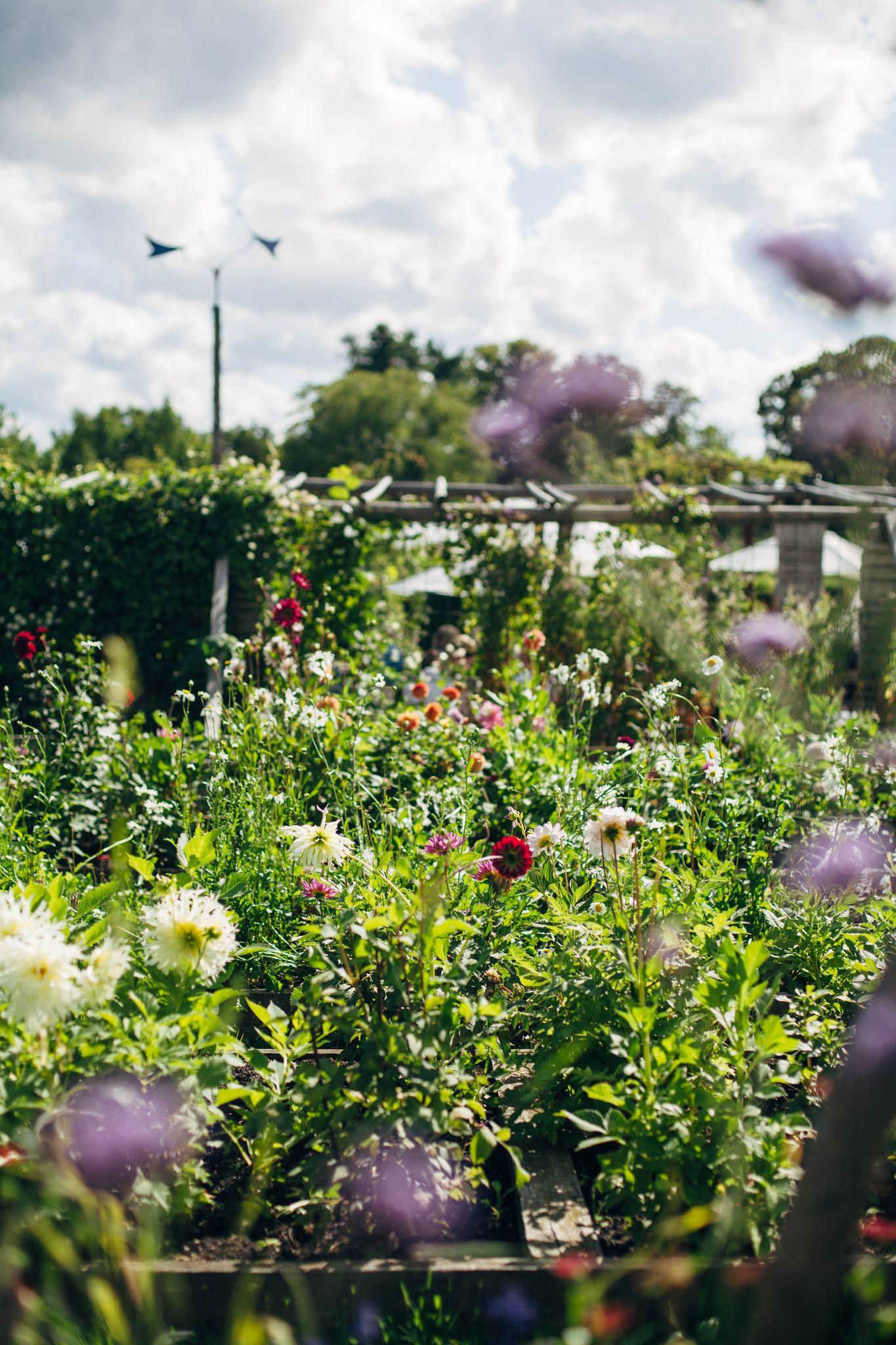 rosendals trädgård (With images) Allotment gardening