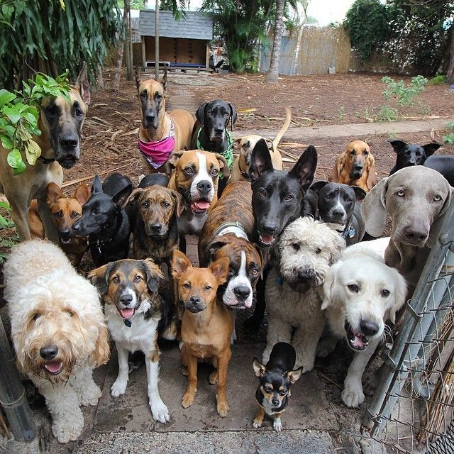 Glorious Group Photos Show The Happiest Pack Of Dogs In Town Dogs Cute Dogs Doggy
