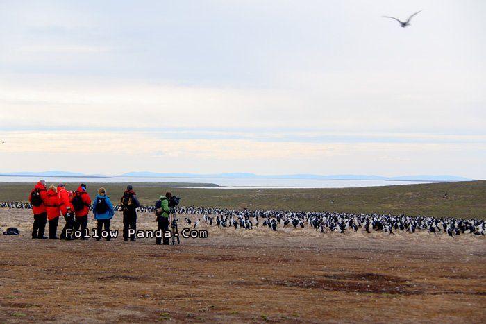 Bird Watching on Bleaker Island, Falkland Islands - A&K Le Boreal Antarctic Expedition Tour   FollowPanda.COM