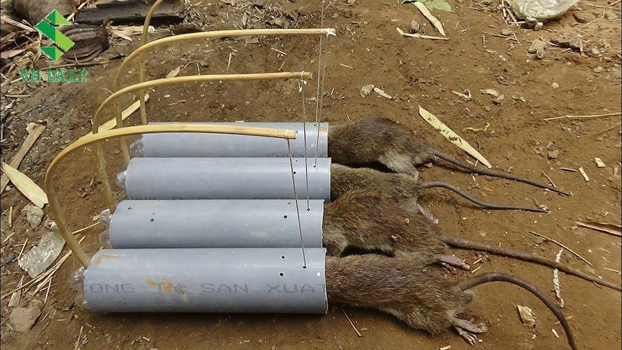 Como hacer trampas para ratas con tubos de pvc youtube equis x pinterest trampa para - Construir trampa para ratas ...