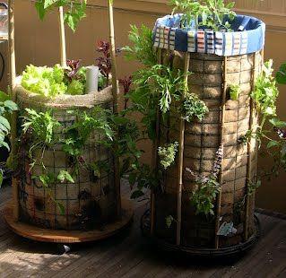 Vertical Gardening Solutions   Phytopod Vertical Gardening