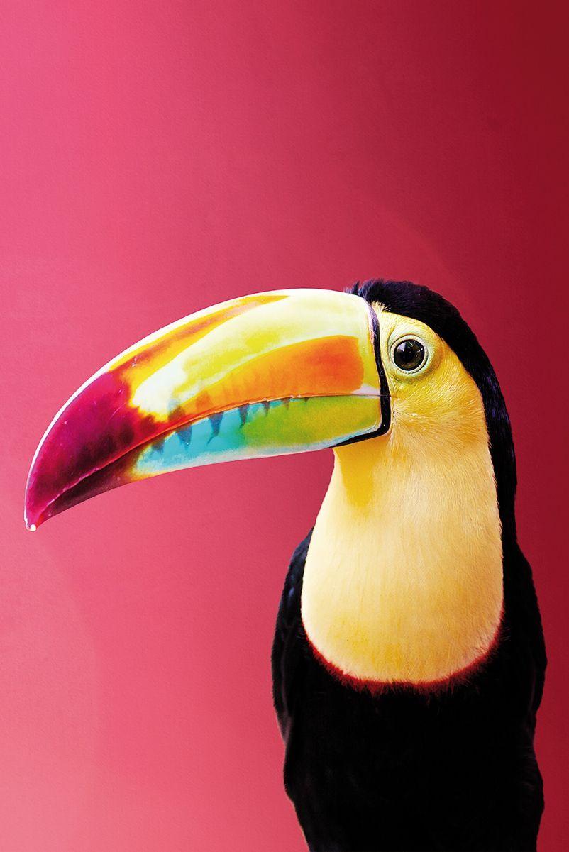 Toucan Poster Bestellen Kleurrijke Achtergronden