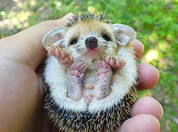 Yes, please! Hedgehogs and hermit crabs and miniature pigs, oh my! :: 5 Cool  Apartment Pets (that aren't dogs) :: Apartment List
